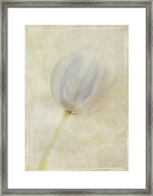 Tulip 1 Framed Print by Marion Galt