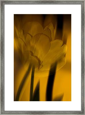 Framed Print featuring the photograph Tulip Abstract by Ed Gleichman