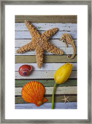 Tulip And Starfish Framed Print by Garry Gay