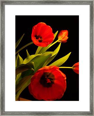 Framed Print featuring the photograph Tulip Arrangement 1 by Peter Mooyman