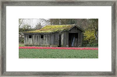 Tulip Barn Framed Print by Mitch Shindelbower