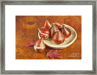 Framed Print featuring the photograph Tulip Bulbs Brocade by Verena Matthew