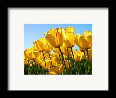 Tulip1 Framed Prints