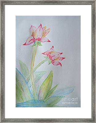 Tulip Duo I  Framed Print by Debbie Portwood