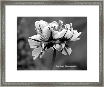 Tulip In Black And White Framed Print