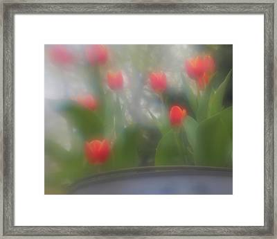 Framed Print featuring the photograph Tulip Mist by Coby Cooper