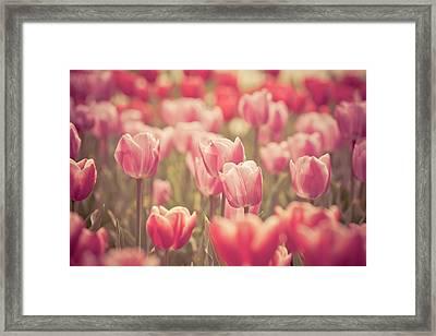 Tulip Framed Print by Pan Hong