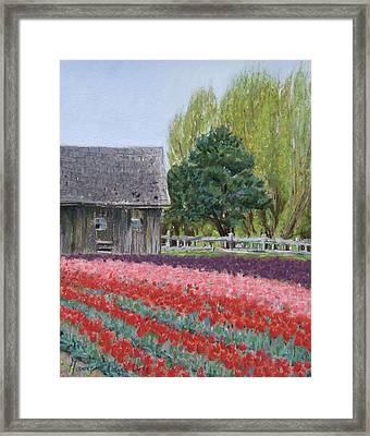 Tulip Season Framed Print by Marie-Claire Dole