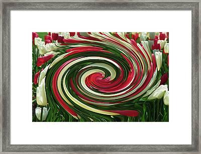Tulip Tornado Framed Print by Rick Rauzi
