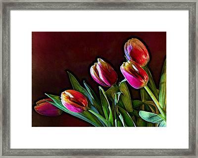Tulip Traced Incandescence Framed Print by Bill Tiepelman