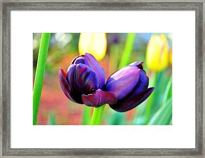 Tulip Twins Framed Print