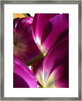 Tulip Weave Framed Print by Kathy Corday
