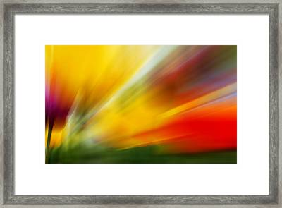 Tulips -2 Framed Print by Mark Ashkenazi