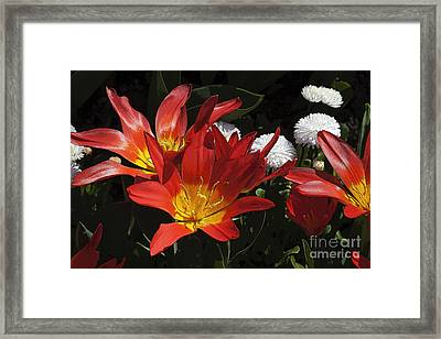 Tulips And Daisies Framed Print