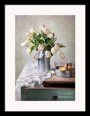Tulipa Framed Prints