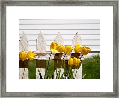 Tulips At The End Of The Fence Framed Print