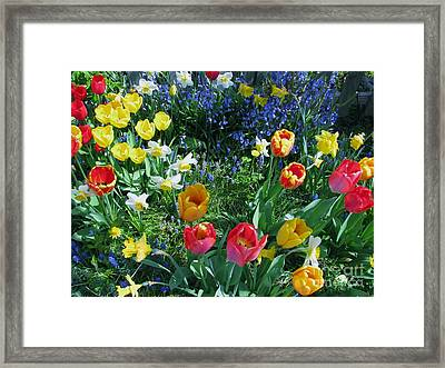 Tulips Dancing Framed Print by Rory Sagner