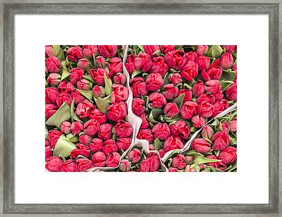 Tulips For Sale At A Flower Market Framed Print by Paul Thompson