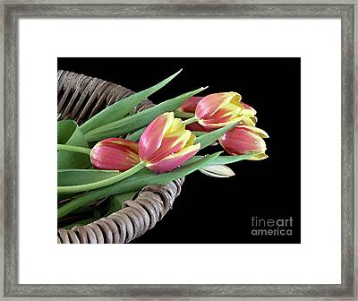Tulips From The Garden Framed Print by Sherry Hallemeier