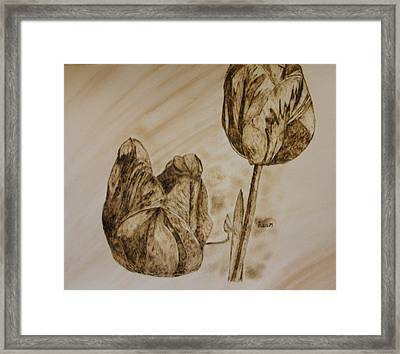 Tulips In Sepia Framed Print by Maureen Hargrove