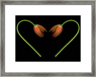 Tulips In Shape Of Heart Framed Print by Marlene Ford