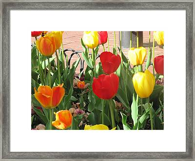 Framed Print featuring the photograph Tulips In The Sunshine by Shawn Hughes