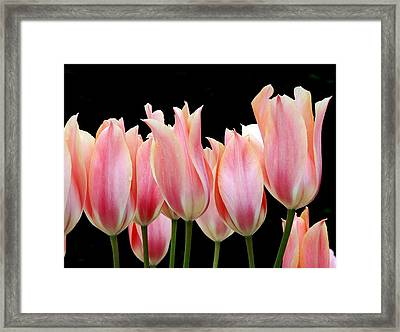 Tulips Framed Print by Nicola Butt