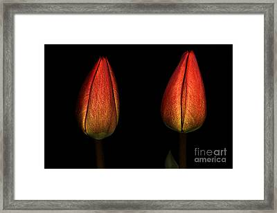Framed Print featuring the photograph Tulips by Odon Czintos