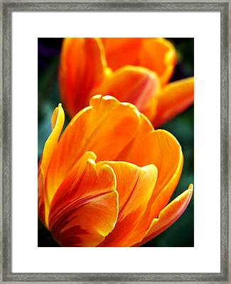 Tulips On Fire Framed Print
