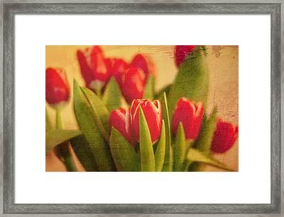 Tulips Framed Print by Paul Davis