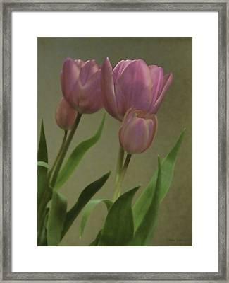 Tulips Reflections Framed Print by Debra     Vatalaro