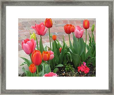 Framed Print featuring the photograph Tulips by Shawn Hughes