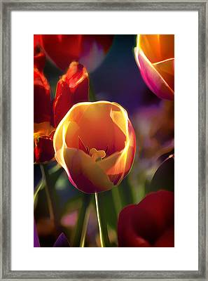 Tulips Through Rose Colored Glass Framed Print