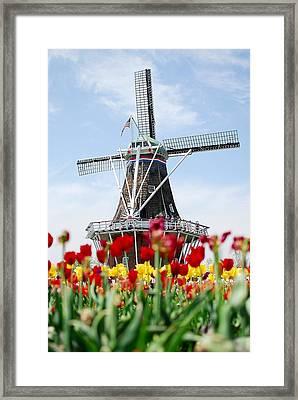 Tulips Windmill Framed Print