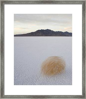 Tumbleweed Spinning Over The Bonneville Framed Print