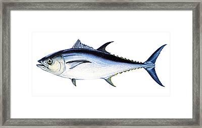 Tuna Framed Print by Granger