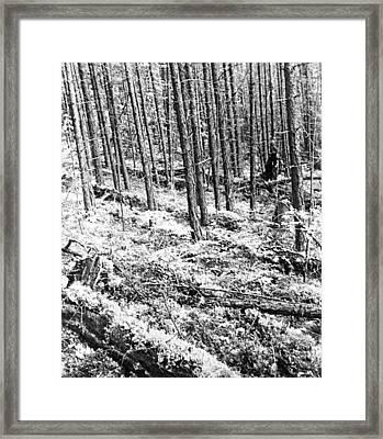 Tunguska Event Site Framed Print by Ria Novosti