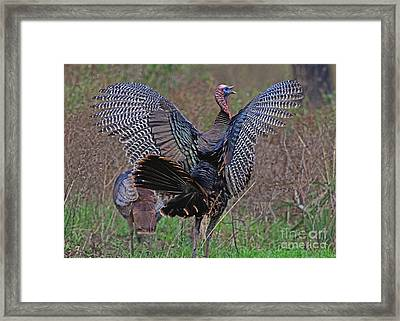 Framed Print featuring the photograph Turkey Revelation by Larry Nieland