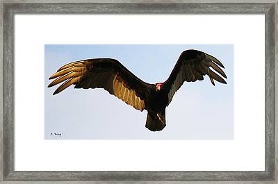 Framed Print featuring the photograph Turkey Vulture Evening Flight by Roena King