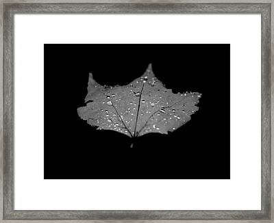 Turn Over A New Leaf Framed Print by Betsy Knapp