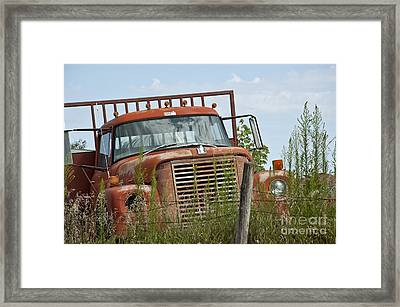 Turned Out To Pasture Framed Print by Wilma  Birdwell
