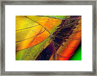 Framed Print featuring the photograph Turning Purple  by David Pantuso