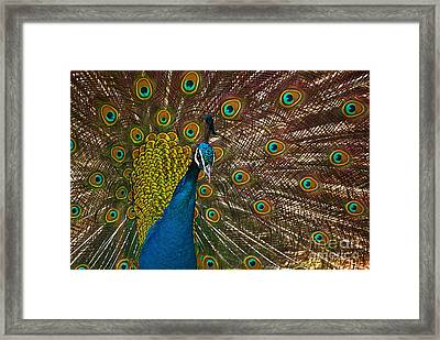 Turquoise And Gold Wonder Framed Print