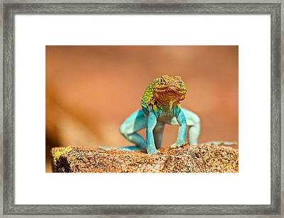 Turquoise Brilliance Framed Print by Elizabeth Hart