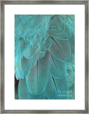 Turquoise Feathers Framed Print by Sabrina L Ryan