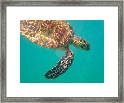 Turtle 3 Framed Print