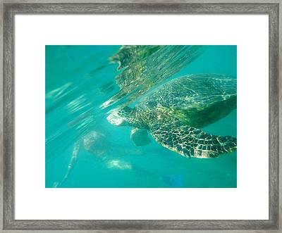 Turtle 8 Framed Print by Erika Swartzkopf