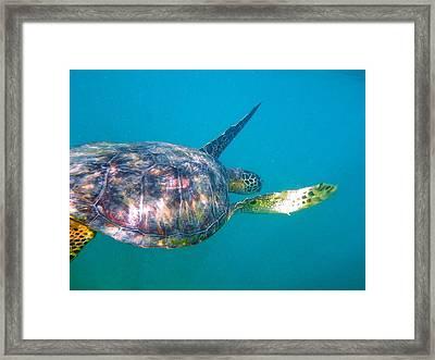Turtle 9 Framed Print