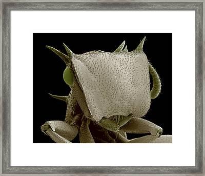 Turtle Ant's Head, Sem Framed Print by Steve Gschmeissner