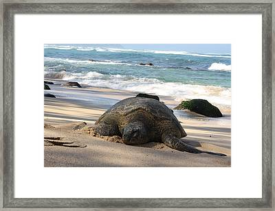 Turtle Beach Framed Print by Natalija Wortman